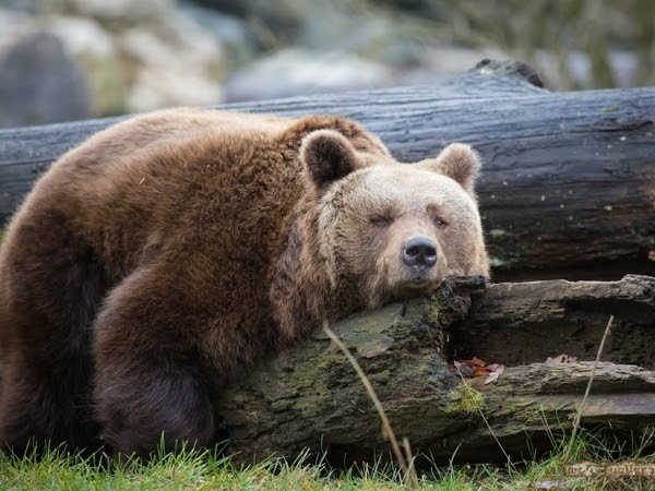 Return of the Bear? Crypto Market Plunges After Fed's Shift in Monetary Policies